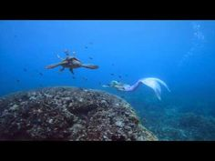 Mermaid Kariel -The Mermaid & the Turtle - YouTube