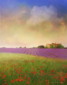 """""""lavender and poppys"""" by r christopher vest, Dolores, Colorado // sunset amid both poppies and lavender. an aged villa in the distance. // Imagekind.com -- Buy stunning, museum-quality fine art prints, framed prints, and canvas prints directly from independent working artists and photographers."""