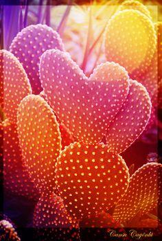 Heart Shaped Cactus by djansu.deviantart.com on @deviantART