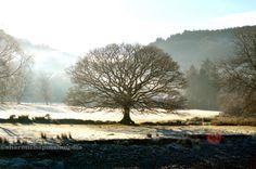 Wall art photography 'tree in sunny winter' by sharonchapmanmedia
