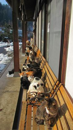 Looks like Switzerland haha. I went to an inn there during winter and there were cats everywhere!