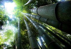 Sagano-Bamboo-Forest-Japan