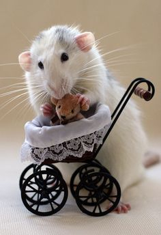 Rat - Playing DOLLS ?? - Cute !
