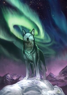 Beautiful animal and aurora for MY She-Wolf! Fantasy Illustrations by Alector Fencer Fuchs Illustration, Fantasy Illustration, Anime Wolf, Wolf Spirit, Spirit Animal, Aurora Borealis, Photoshop, Lightroom, Husky Drawing