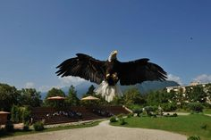 Spectacular shows with birds of prey like eagles, hawks and owls.