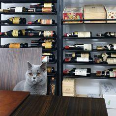 #wine #luxurywine #oldwine #blu Lockers, Locker Storage, Wine, Luxury, Furniture, Instagram, Home Decor, Decoration Home, Room Decor