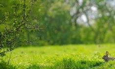 Bunny On The Meadow Free Stock Photo - Public Domain Pictures Daily Astrology, Rabbit Pictures, Wild Rabbit, High Quality Images, View Image, Free Stock Photos, Fairy Tales, Nature, Cute Animals