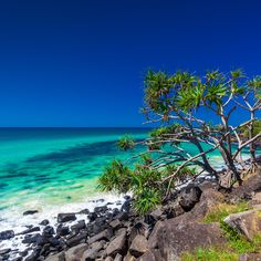 View of the day: Burleigh Heads National Park on Australia's beautiful Gold Coast! #australia #goldcoast #beachviews #beachlife #viewoftheday