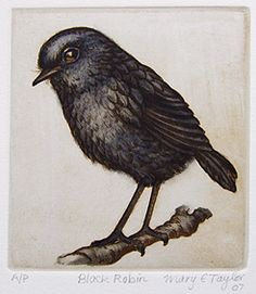 Black Robin - Mary Taylor NZ - hand colored - limited edition - fine art etchings