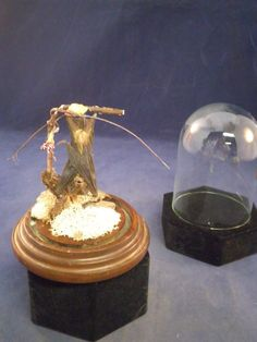 Hey, I found this really awesome Etsy listing at https://www.etsy.com/listing/248196278/taxidermy-bat-in-glass-dome-display