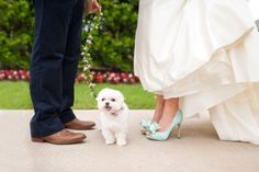 We love this floral leash New Leaf Florist created for this sweet puppy! Photo by Ely Fair Photography. #wedding #puppy #dog #leash