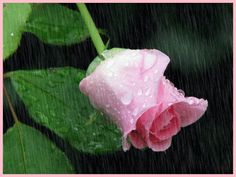 """Szerelmes idézetek - Szerelemes idézetek, Szerelmes képeslapok,versek,gondolatok ,ismert,ismeretlen szerzőktől - Rózsák-Virág"""" csodák."""".. magazin - Hotdog.hu"""