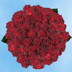 Introducing 200 Fresh Cut Dark Red Roses  Black Baccara Roses  Fresh Flowers Wholesale Express Delivery  Perfect for Birthdays Anniversary or any occasion. Great Product and follow us to get more updates!