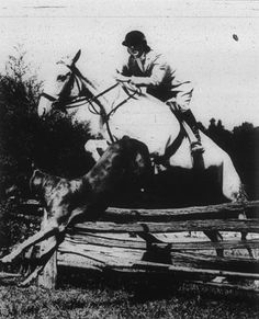 Photo Title  Over the Jump  Photographer/Creator  F. Clyde Wilkinson  Collection  1944  Publisher  Washington Times Herald  Caption/Description  Mrs. Fred J. Hughes, Jr., prominent Washington, Virginia, and Maryland horsewoman takes her horse over the jump, while her Great Dane leads the way.
