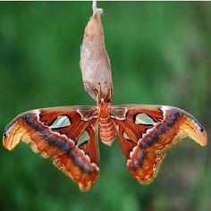 Eco Friendly Clothing - Silk Moth