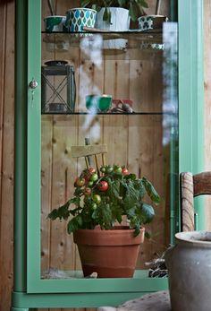 Transforma una vitrina en un invernadero en miniatura