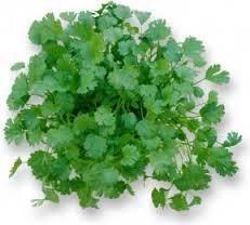 Koriandr Coriander Leaves, Fresh Coriander, Growing Vegetables, Fruits And Veggies, Cilantro, Korn, Garam Masala, Garden Plants, Pesto