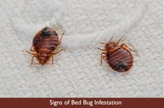 Signs of Bed Bug Infestation http://www.skylinepest.com/