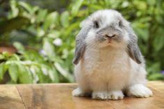 Hasen - Kaninchen / Bunny - Rabbit