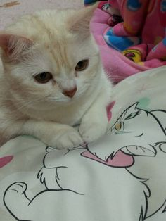 Mary  #neko #cat   (via fukucyanmama)