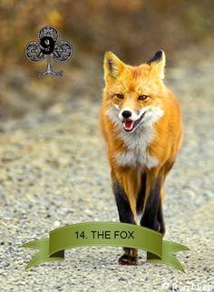 14. The Fox Otter, Sky Fox, Cute Fox, My Spirit Animal, Animals Beautiful, Creatures, Vixen, Pets, Tudor