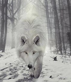 Wolf Totem and Spirit Animal... pathfinder, shape shifter, magic maker…