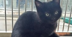 It was initially thought nine-week-old Bellini, who was dumped when just a few days old, was male