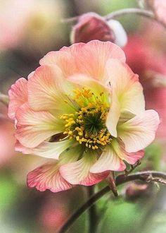Anemone <3