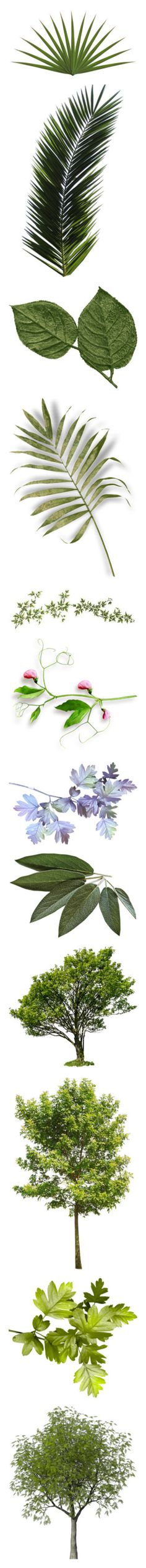 """""""Branches, Leaves, Vines,&Foliage(3): Variety"""" by emalenf ❤ liked on Polyvore featuring flowers, plants, fillers, backgrounds, leaves, effects, fotki, greenery, detail and embellishment"""