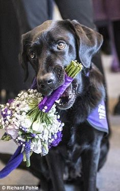 The monarch took a bunch of flowers from Yarna, the seven-year-old black Labrador...