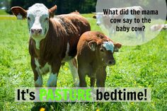 What did the mama cow say to the baby cow? It's PASTURE bedtime! Farm Jokes, Farm Humor, Cow Puns, My Stomach Hurts, Funny Memes, Hilarious, Baby Cows, Cute Cows, Friday Humor