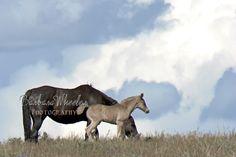 South Steens Wild Horses B4007