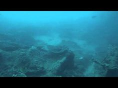 A panorama of the striking topography at Checkers, a reef off Ponta do Ouro. This particular reef is notable for the number of plate corals of various sizes . Africa Travel, Us Travel, Corals, Diving, Southern, Traveling, Plates, Painting, Viajes