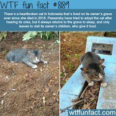Heartbroken cat doesn't want to leave it's owners grave - WTF fun fact