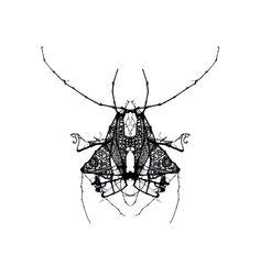 Winter Bugs by Ana Gomez, via Behance #black #white #lace #bugs #illustration