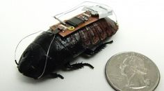 Scientists creating remote-controlled cockroaches - Techdigg.com