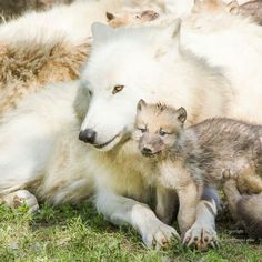 Mommy and wolf babeh :3