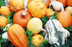 Various of organic pumpkins by Nuchylee Photo on Pumpkin Images, Pumpkin Photos, Squash, Coconut Oil, The Creator, Clean Eating, Nutrition, Organic, Vegetables