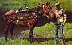 A trout horseman