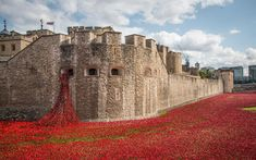 """From the first light of dawn to the fall of night.....time lapse film of the sea of red ceramic poppies at the Tower of London.  """"We will remember them."""""""