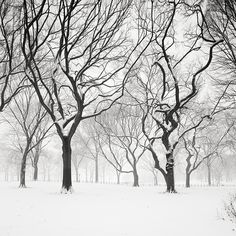 Josef Hoflehner, Snow Capped Central Park, Study 5 - New York City, NY, 2011