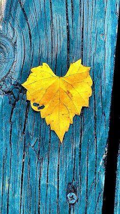 Wallpaper yellow heart 19 New ideas Heart In Nature, Heart Art, Golden Heart, I Love Heart, Happy Heart, My Funny Valentine, Valentines, Shades Of Yellow, Happy Colors