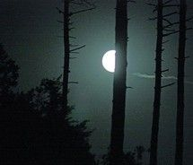 Half moon or Full moon ? I would love to see this at night.Love the Moon. Paranormal Romance Books, Night Love, Full Moon, Trees To Plant, Constellations, Headspace, Night Lights, Werewolf, Forests