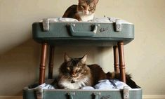 De dierenwinkels liggen vol met kattenmanden en ander spul voor jouw pluizige vrienden, maar het is veel leuker om zelf een mooi huisje voor je kat te maken