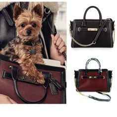 Fashion Designer Leather Pet Carrier Small Dogs Bag For Puppy Chihuahua Traveling Slings Handbags