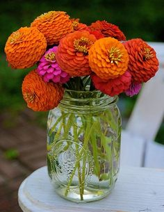 zinnias...love the bright colors. Growing these next year