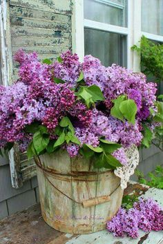 Purple flowers are a great way to add interest to your yard or landscape. See some of our favorite purple garden flowers! Lilac Flowers, Spring Flowers, Beautiful Flowers, Purple Roses, Purple Lilac, Exotic Flowers, Container Gardening, Vegetable Gardening, Planting Flowers