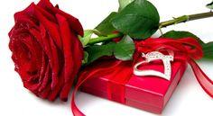 Beautiful love filings rose..