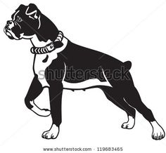 Dog,Boxer Breed,Black And White Vector Picture Isolated On White ...
