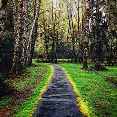 A path through the Hoh Rainforest outside of Seattle. Photo courtesy of ravenreviews on Instagram.